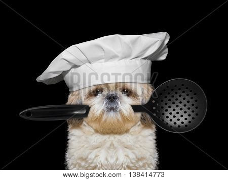 Dog chef holding a spoon in his mouth -- isolated on black