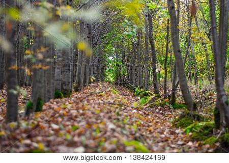Autumn park alley. Nature lanscape. Colorful autumn fall season.
