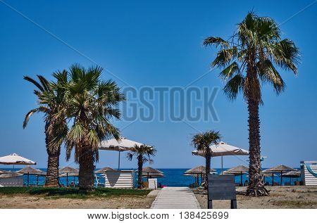 Palm trees on the beach on the coast of the Aegean Sea in Greece