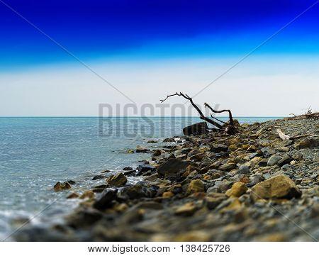 Horizontal Vivid Dry Tree Trunk On Rocky Ocean Beach  Background