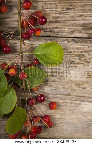 Autumn Apples On A Wooden Background