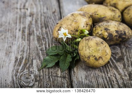 Raw Potatoes With Leaves