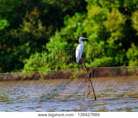 White stork on fishing net bokeh background