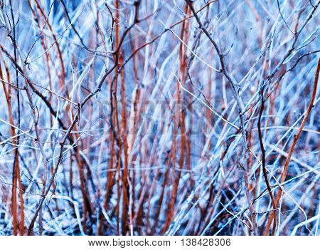 Horizontal Vivid Bush Branches Bokeh Background Backdrop