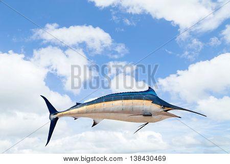 Marlin - SwordfishSailfish saltwater fish (Istiophorus)on sky background