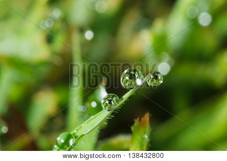 Dew drops on green grass leaves with nature background