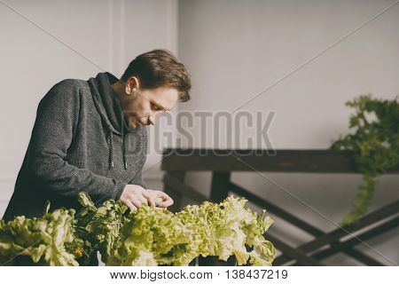 Handsome grower is checking and taking care of plants indoor.