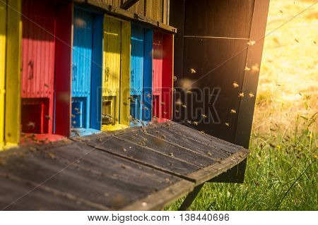 Color bee hive with flying bees meadow