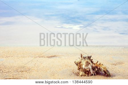 conch shell on the sand at calmness seaside relaxing feel
