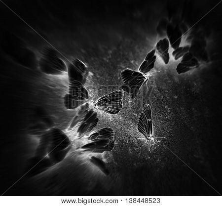 Square black butterflies vignette motion abstraction background backdrop