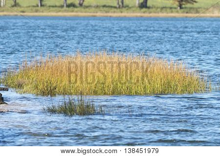Small island of marsh grass in shallow water