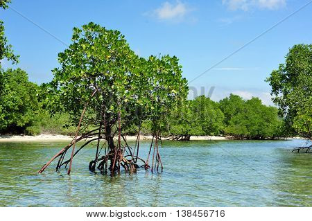 Mangrove forest and trees in West Bali in Bali Indonesia