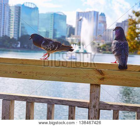 Orlando skyline fom lake Eola with doves in Florida USA