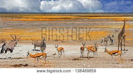 A vibrant waterhole in Etosha with giraffe, oryx, zebra & springbok