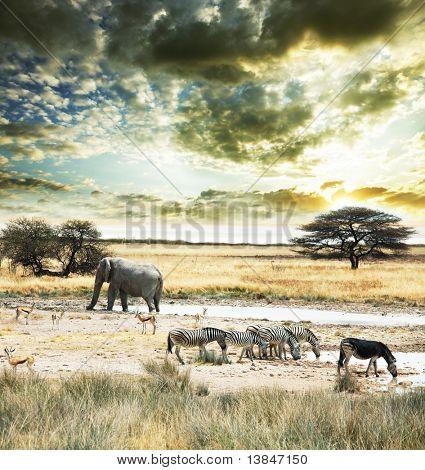 Wildes Afrika