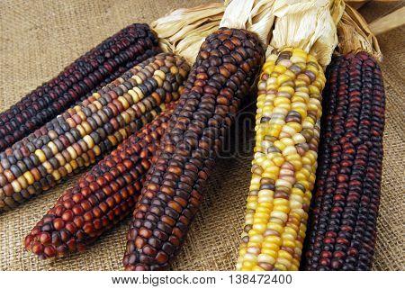 closeup of the cob corn Indian on hessian fabric