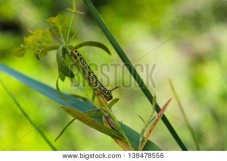 A caterpillar creeps on a green plant