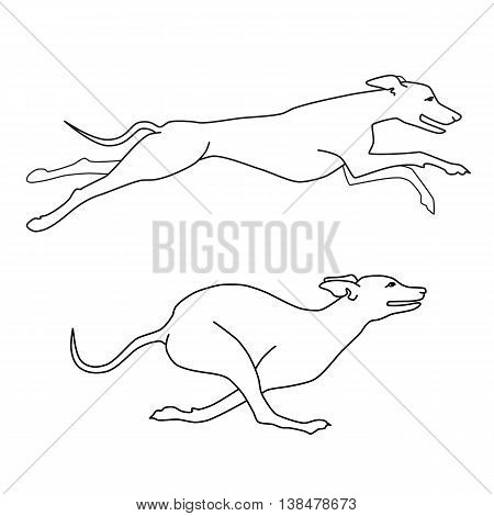 Contour vector image of running dogs whippet breed, two poses