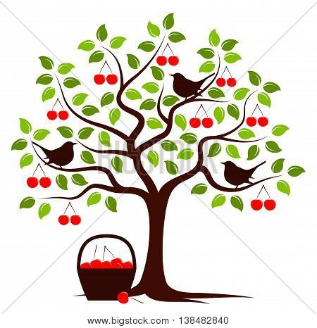 vector cherry tree with birds and basket of cherries isolated on white background