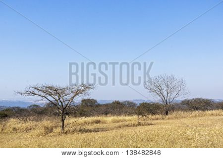 Parched dry winter grass trees and distant skyline on rural landsacpe in South Africa