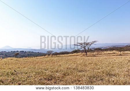 Dry Winter Grass Trees And Skyline On Rural Landsacpe