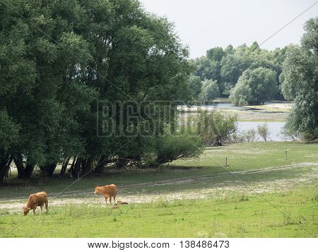 the river rhine near wesel in germany