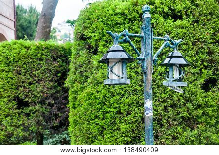 old lantern on a background of a hedge