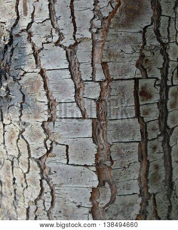 tree bark as a background close-up macro.