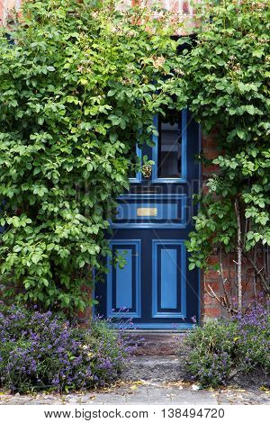 beautiful blue front door in an old brick house overgrown with climbing roses in a typical old town in North Germany