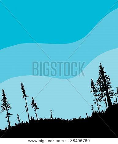 Swedish Forest Background With Blue Sky