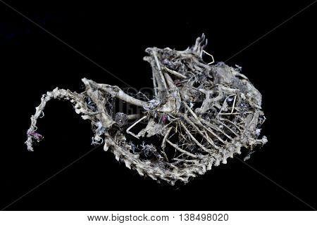 Mummified squirrel skeleton on a black background
