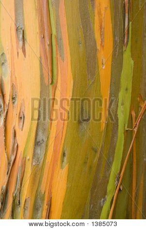 Rainbow Shredded Tree Bark