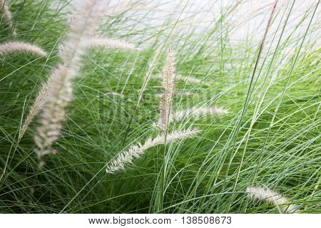 grass flower background in nature stock photo