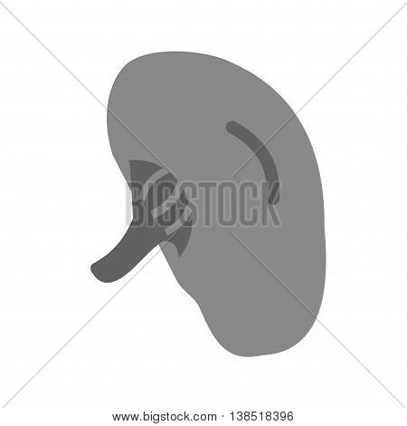 Spleen, anatomy, human icon vector image. Can also be used for human anatomy. Suitable for mobile apps, web apps and print media.
