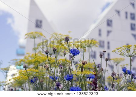 AARHUS DENMARK - JULY 13 2016: New modern architecture on Aarhus harbor. The buildings called The Iceberg. View from Ø-Haven (Island-garden) through flowers. July 13 2016.