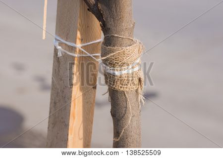 Garter Sapling Tree With A Rope To A Wooden Bar