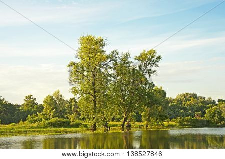 Poplar Tree Over Lake