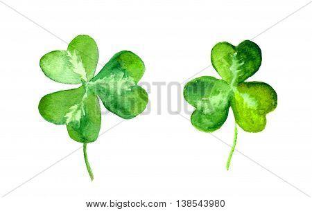 Clover leaves. Green trefoil. Watercolor botanical illustration