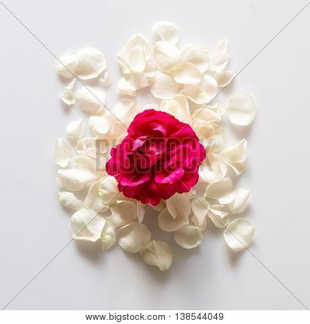 White rose petals on white background. Romantic theme