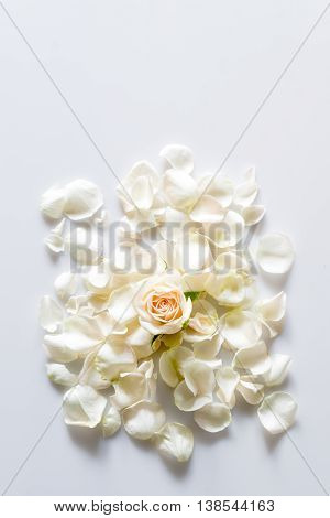 White rose petals on white background with space for your text