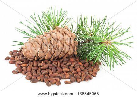 Cedar cone with branch