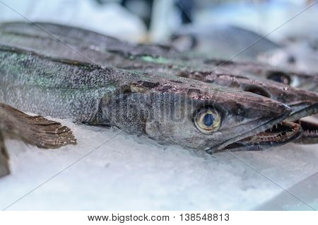 hake on the pieces of ice on the market
