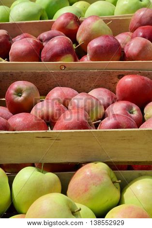 Fresh picked apples in crates ready for market. Fruit growing in Europe.