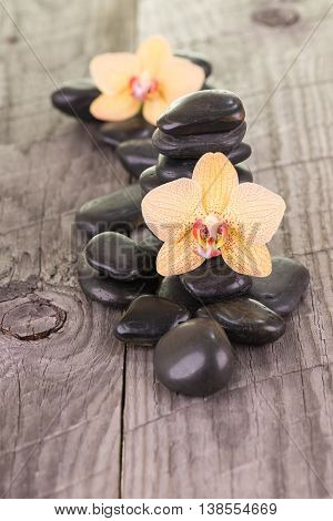 Yellow Phalaenopsis orchids and black stones on weathered wood