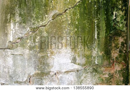Fungal mold bacteria unhygiene wall house green