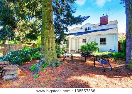 House Exterior. Back Yard With Patio Area And Big Pine Trees.