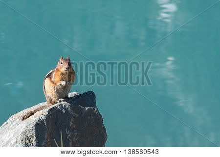 Ground Squirrel Sits on Rock In Front of Lake Louise and her crystal blue water