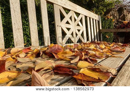 Close up from an wooden bench with autum foliage