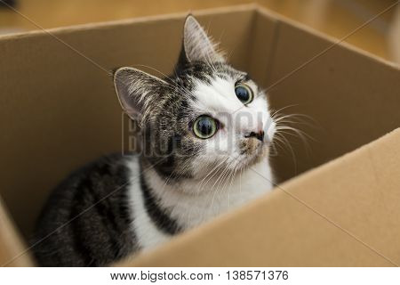 domestic cat sitting in the cardboard box