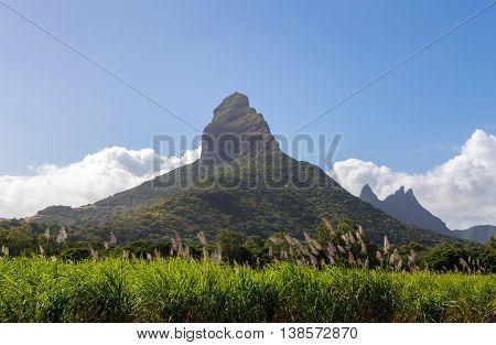 Piton de la Petite with sugarcane blossom mountain in Mauritius.